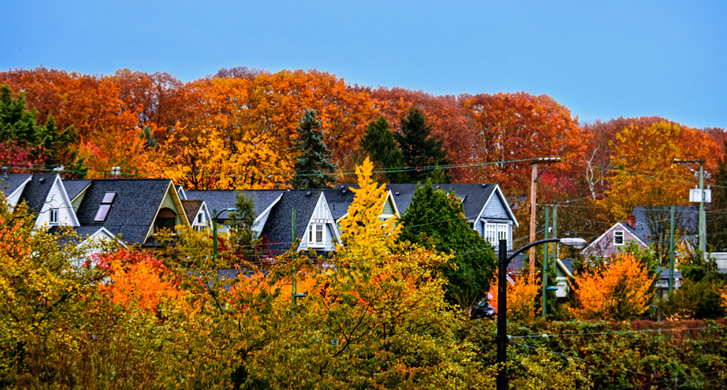 Autumn trees and rooftops