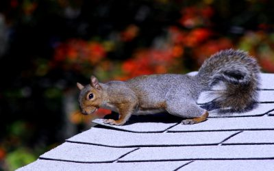 5 Animals That Pose a Risk to Roofs in Massachusetts