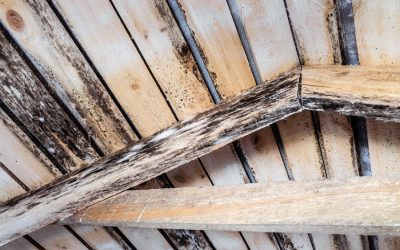 How a Healthy Roof Protects Your Home from Mold Damage